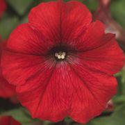 Blooming Block Kwik Kombos™ Walk of Stars™ Alternate Image 3