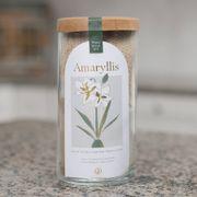 Amaryllis Bulb Kit Thumb