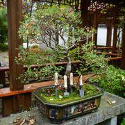 DeWit 4pc Bonsai Tool Set Alternate Image 1