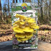 Mushroom Golden Oyster Countertop Kit