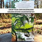 Mushroom Golden Oyster Countertop Kit Alternate Image 1