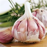 Garlic Inchelium Red