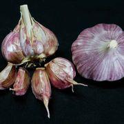 Garlic Chesnok Red Alternate Image 2