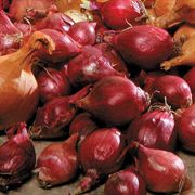 Red Onion Bulbs - Pack of 80