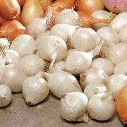 White Onion Bulbs - Pack of 80