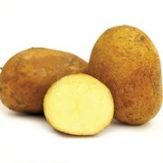 German Butterball Potato