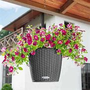 Cottage Hanging Basket