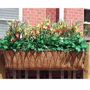 36 inch Nelumbo Window Box