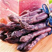 Pacific Purple Asparagus Plants