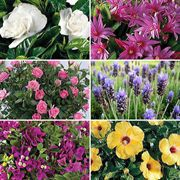 March-Start 6-Month Flowering Plant Club