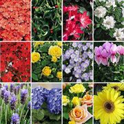 October-Start 12-Month Flowering Plant Club