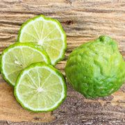 Kieffer Lime Tree