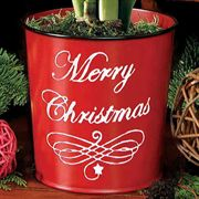 Merry Christmas Grand Trumpet® Amaryllis Gift