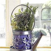 Fragrant Herb Quartet Gift Plant
