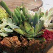 Succulent Terrarium Bowl Alternate Image 1