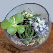 Succulent Terrarium Bowl Alternate Image 2