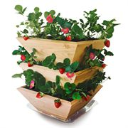 Strawberry Patch Tower with Saucer