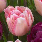 Tulip Ballroom Blossoms Mix Alternate Image 1