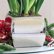 3 -in -1 Double Ruffle Red Amaryllis in Stainless Container