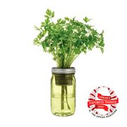 Modern Sprout Garden Jar - Parsley