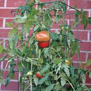 47 inch Parks Wire Tomato Pen - Pack of 3