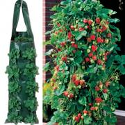 Parks Whopper Strawberry Plants & 2 Growin Bags