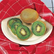 Pair of Kiwi Fruiting Plants