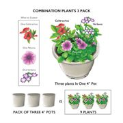 Bold and Dramatic Combination (pack of 3) Alternate Image 1