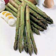 Asparagus 'Jersey Knight' Alternate Image 1