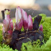 Gardenia Peony Alternate Image 1