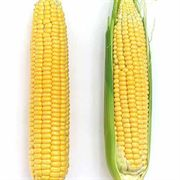 Early Sunglow Hybrid Corn Seeds image