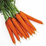 Tendersnax Hybrid Carrot Seeds