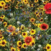 Bee Buddies Wildflower Mix Thumb