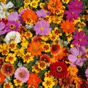 Monarch Butterfly Wildflower Mix image