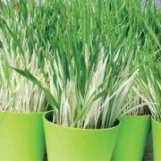 Tabby Cat Grass image
