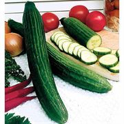 Spring Swallow Hybrid Cucumber Seeds