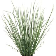 Twisted Arrows Fuseable® Juncus Seeds
