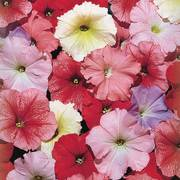 Celebrity Desert Sky Mix Petunia Seeds image