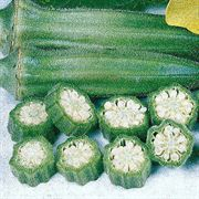 Clemson Spineless Okra Seeds