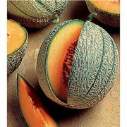 French Orange Hybrid Melon Seeds