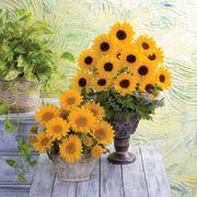 Vincent's® Choice Hybrid Sunflower Seeds Alternate Image 1