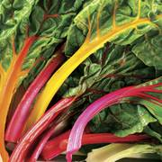 Bright Lights Swiss Chard Seed Tape