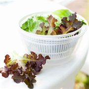 Lettuce Gourmet Seed Tape Collection