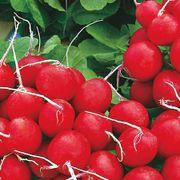 Annabel Hybrid Radish Seed Tape image