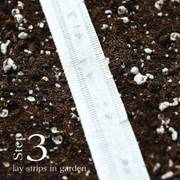 Sylvestra Lettuce Seed Tape Alternate Image 3
