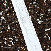 Little Finger Carrot Seed Tape Alternate Image 3