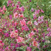 Wildflower Mountain Garland