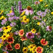 Native Perennial Seed Mixture image