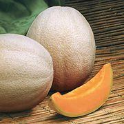 Aphrodite Hybrid Cantaloupe Seeds