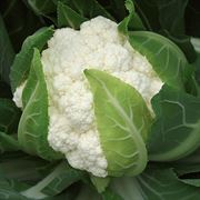 Flamenco Hybrid Cauliflower Seeds